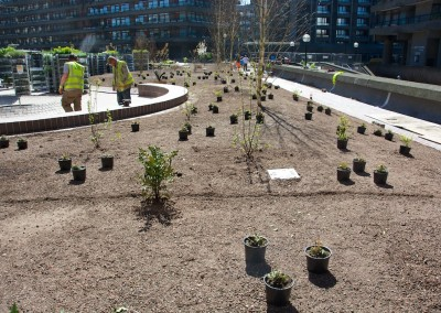 Setting out Beech Gardens