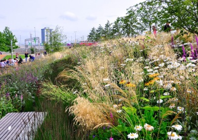 Olympic Park Europe Garden July